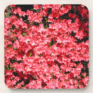 Azaleas Lots of Pretty Pink Flowers Drink Coaster