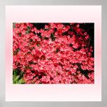 Azaleas. Pretty Pink Flowers. Print