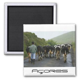 Azorean farmer square magnet