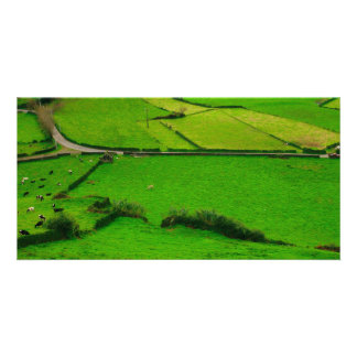 Azores pastures photo greeting card