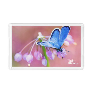 Azure Butterfly Acrylic Tray