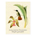 Azure Crowned Hummingbird Art Postcard
