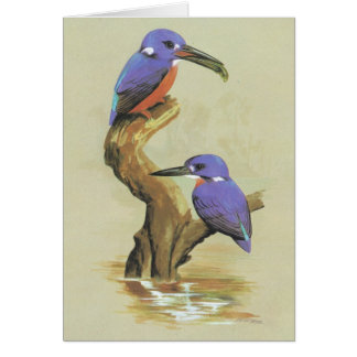 Azure Kingfisher - Ceyx azureus Card