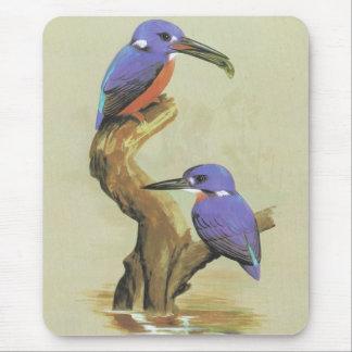 Azure Kingfisher - Ceyx azureus Mouse Pad
