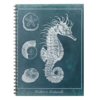 Azure Seahorse Study I Notebooks