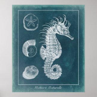 Azure Seahorse Study I Poster