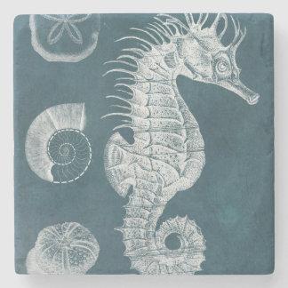 Azure Seahorse Study I Stone Coaster