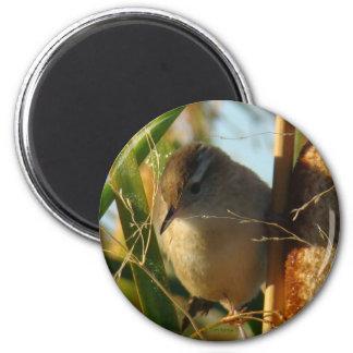 B0003 Marsh Wren 6 Cm Round Magnet