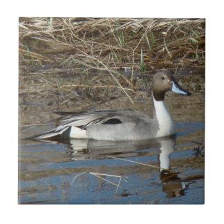 B0005 Pintail Duck Drake Tile