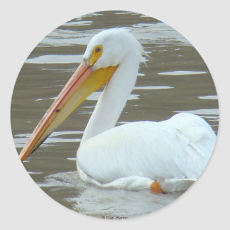 B0015 White Pelican sticker