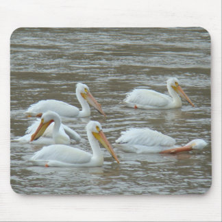 B0016 American White Pelicans Mouse Mat