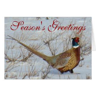 B0022 Ring-necked Pheasant Card