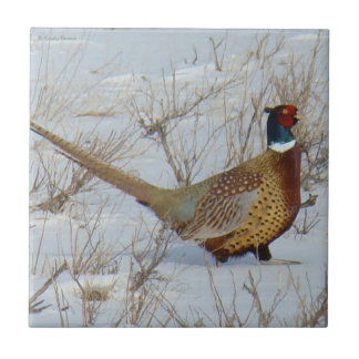 B0022 Ring-necked Pheasant Tile