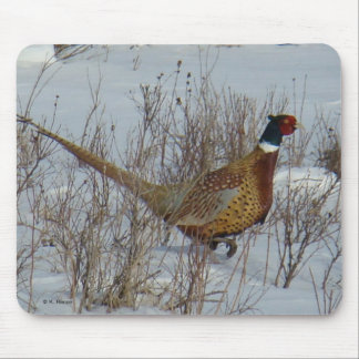 B0023 Ring-necked Pheasant Mouse Mat