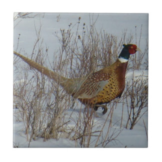 B0023 Ring-necked Pheasant Tile