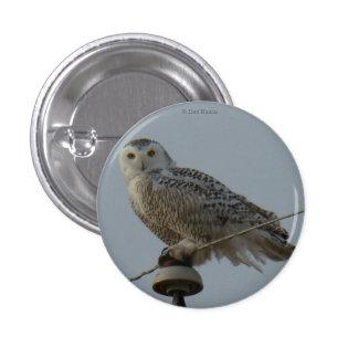 B0038 Snowy Owl 3 Cm Round Badge