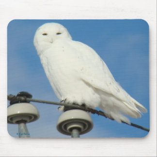 B0050 Snowy Owl Mouse Pads