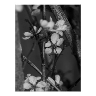 B&W Floral - Delicate Flowers 2 Poster