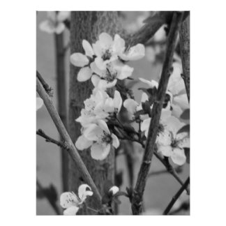 B&W Floral - Delicate Flowers Poster