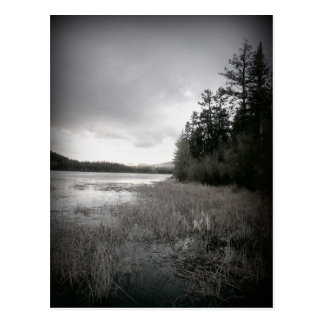 B&W Lake Marsh Landscape Postcard