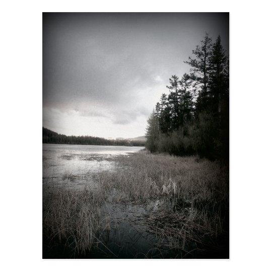 B&W Lake Marsh Landscape Postcard