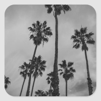 B&W Los Angeles palms Square Sticker