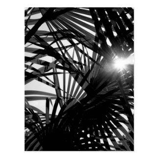 B&W Palm 4 Postcard