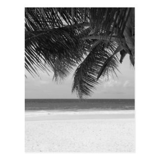 B&W Palm 7 Postcard
