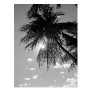 B&W Palm Postcard
