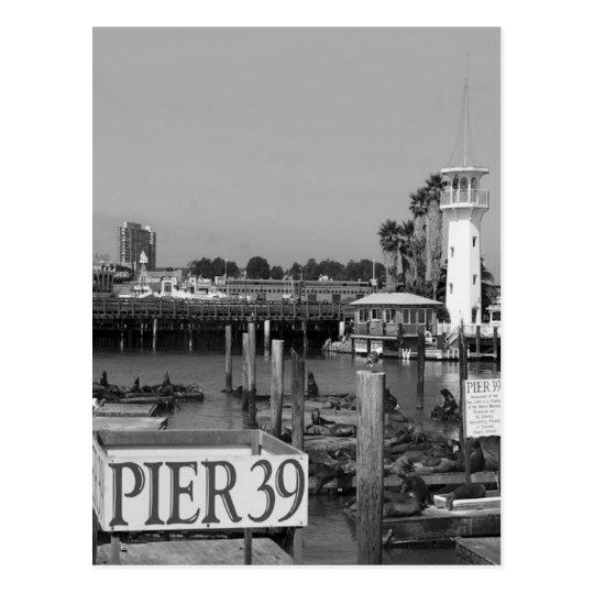 B&W Pier 39 Sea Lions Postcard