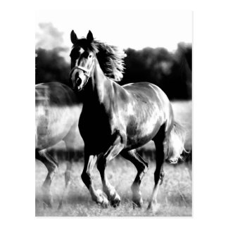 B W Running Horse Post Cards