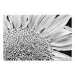 B&W Sunflower Photo Print