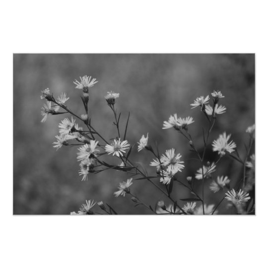B&W White Flowers Poster
