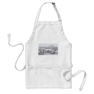 Baad Weather Aprons