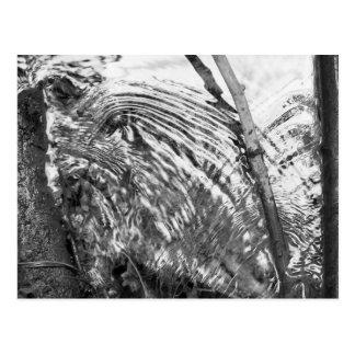 Babbling Brook (b&w) Postcard