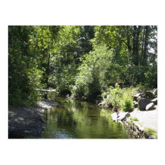 Babbling brook in beautiful Oregon Postcard