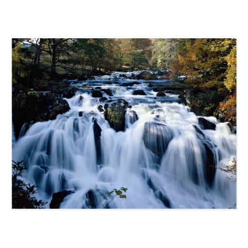 Babbling brook in forest from the Forest Post Card