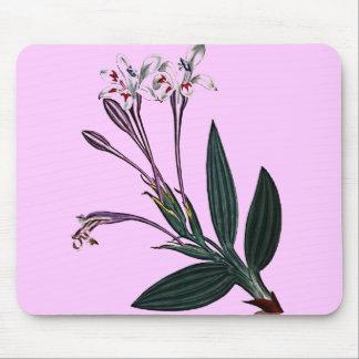 Babiana Tubiflora Mouse Pad
