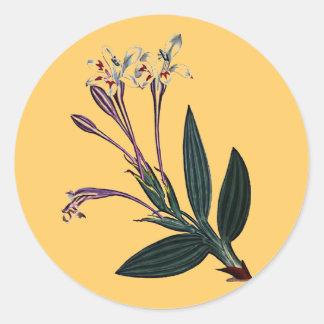 Babiana Tubiflora Round Sticker