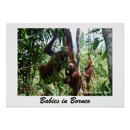 Babies in Borneo Posters