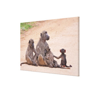 Baboon family sitting on ground canvas print