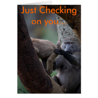 Baboon Inspection, Just Checking on you... Card