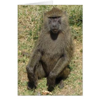 Baboon male card