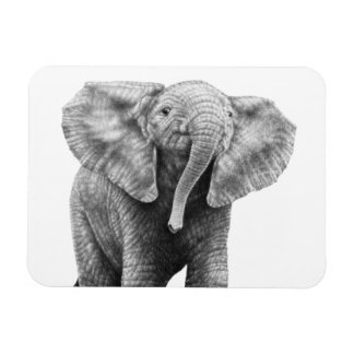Baby African Elephant Premium Magnet