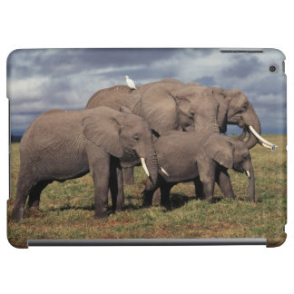 Baby African Elephant with family