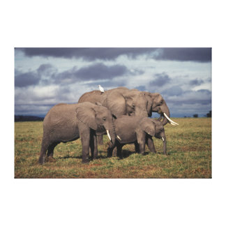 Baby African Elephant with family Canvas Print
