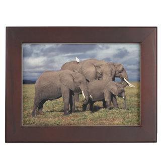 Baby African Elephant with family Keepsake Box