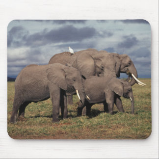 Baby African Elephant with family Mouse Mat