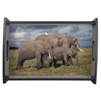 Baby African Elephant with family Serving Tray