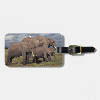 Baby African Elephant with family Travel Bag Tags